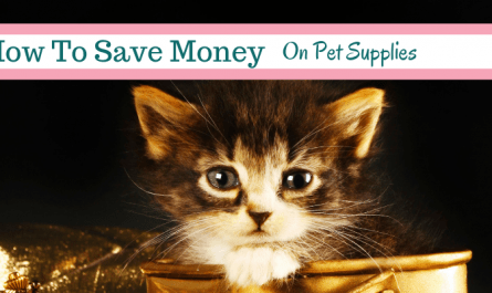 money saving tips for pets