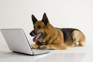 pet supplies online canada