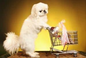 Best deals on pet supplies Canada