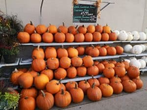 are pick your own or grocery store pumpkins cheaper